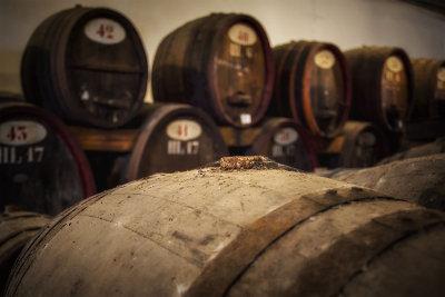 Visita all'Azienda vinicola Contini di Cabras