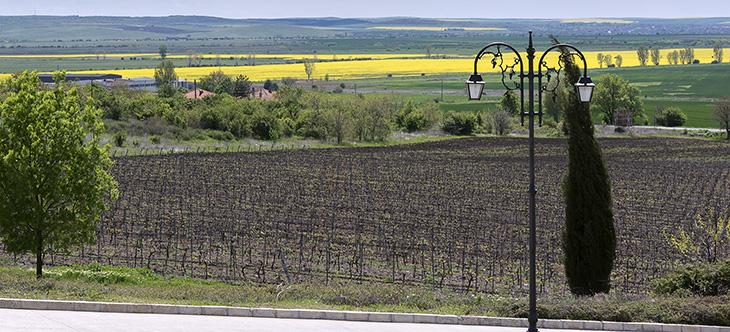 La Bulgaria del vino – Racconto di un'esperienza all'insegna del vino di qualità